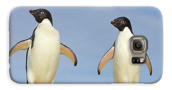 Adelie Penguin Duo Galaxy S6 Case by Yva Momatiuk John Eastcott