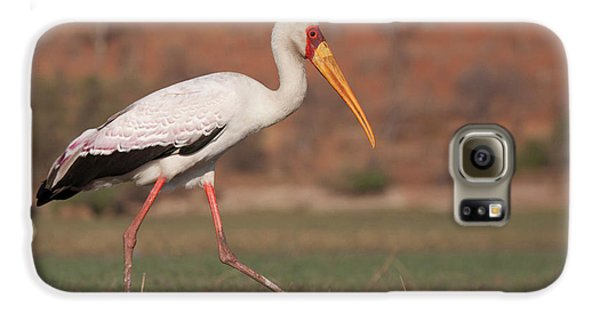 Africa, Botswana, Chobe National Park Galaxy S6 Case