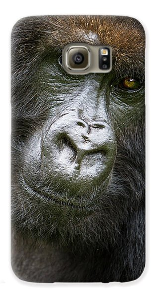 Africa Rwanda Female Mountain Gorilla Galaxy S6 Case