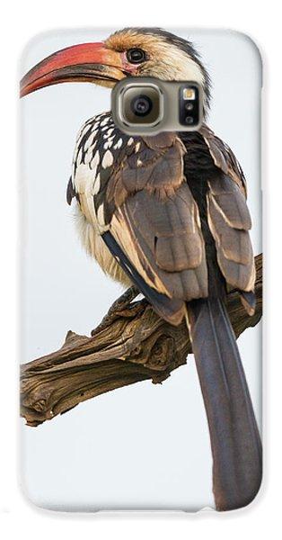 Hornbill Galaxy S6 Case - Africa Tanzania Red-billed Hornbill by Ralph H. Bendjebar