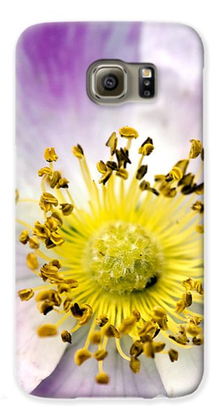 Alberta Wild Rose Galaxy S6 Case