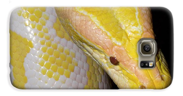 Albino Burmese Python Galaxy S6 Case by Nigel Downer
