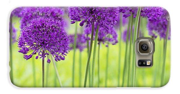 Allium Hollandicum Purple Sensation Flowers Galaxy S6 Case