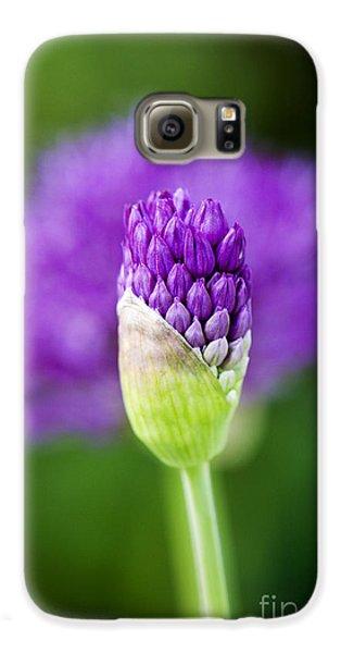 Allium Hollandicum Purple Sensation Galaxy S6 Case
