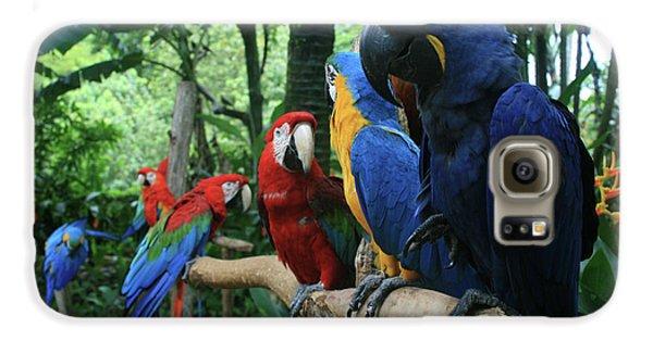Aloha Kaua Aloha Mai No Aloha Aku Beautiful Macaw Galaxy S6 Case