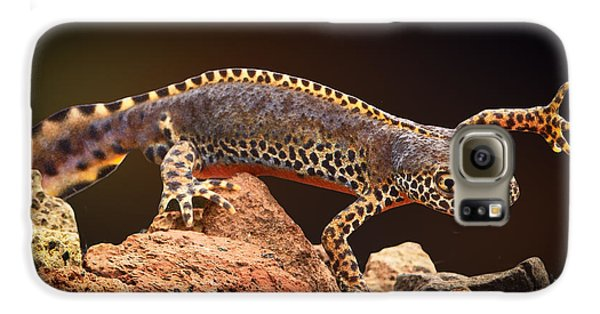 Alpine Newt Galaxy S6 Case by Dirk Ercken