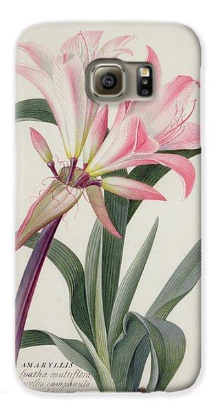 Lily Galaxy S6 Case - Amaryllis Belladonna, 1761 by Georg Dionysius Ehret