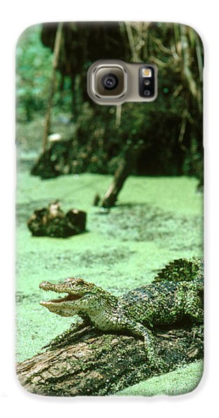 American Alligator Galaxy S6 Case by Gregory G. Dimijian, M.D.