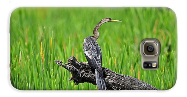 American Anhinga Galaxy S6 Case by Al Powell Photography USA