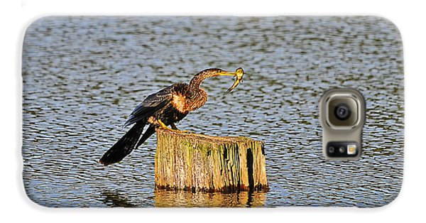 American Anhinga Angler Galaxy S6 Case by Al Powell Photography USA