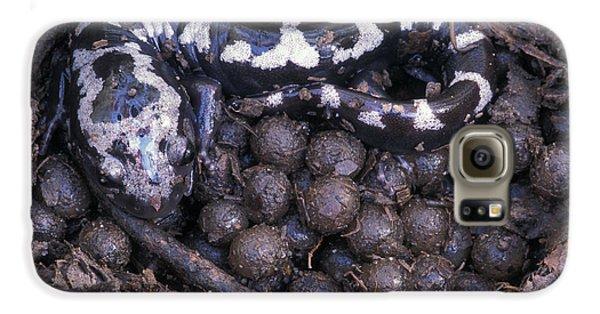 An Endangered Marbled Salamander Nests Galaxy S6 Case
