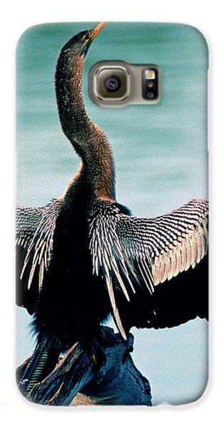 Anhinga Anhinga Anhinga Drying Feathers Galaxy S6 Case