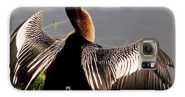 Anhinga Anhinga Anhinga Drying Plumage Galaxy S6 Case by Millard H. Sharp