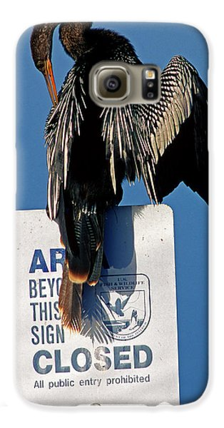 Anhinga Perched On A Signpost Galaxy S6 Case