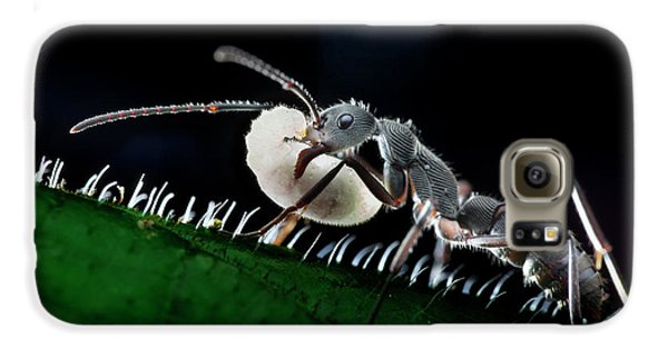 Ant Carrying Larva Galaxy S6 Case