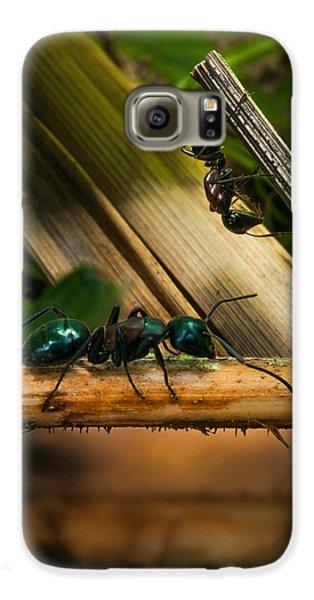 Ants Adventure 2 Galaxy S6 Case by Bob Orsillo