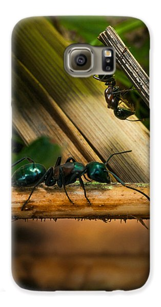 Ant Galaxy S6 Case - Ants Adventure 2 by Bob Orsillo