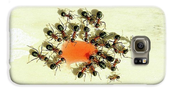 Ants Feeding Galaxy S6 Case by Heiti Paves