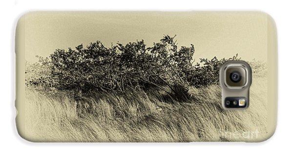 Apollo Beach Grass Galaxy S6 Case