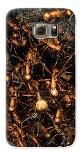 Army Ant Bivouac Site Galaxy S6 Case by Gregory G. Dimijian, M.D.