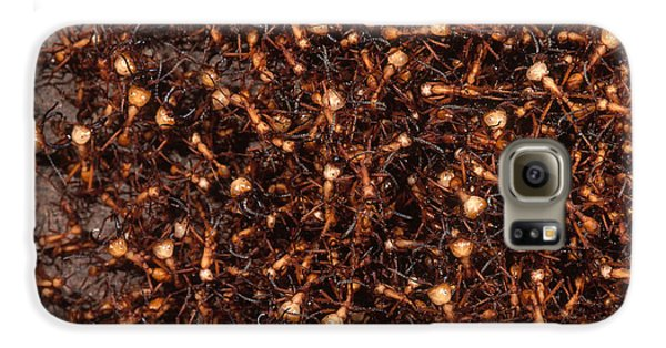 Army Ants Galaxy S6 Case by Art Wolfe