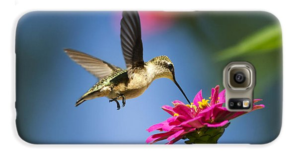 Art Of Hummingbird Flight Galaxy S6 Case