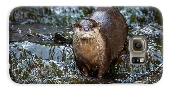 Asian Small-clawed Otter Galaxy S6 Case by Paul Williams