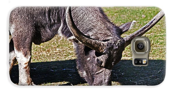 Asian Water Buffalo  Galaxy S6 Case by Miroslava Jurcik