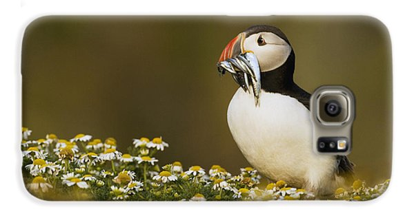 Atlantic Puffin Carrying Fish Skomer Galaxy S6 Case by Sebastian Kennerknecht