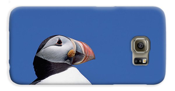 Atlantic Puffin In Breeding Colors Galaxy S6 Case by