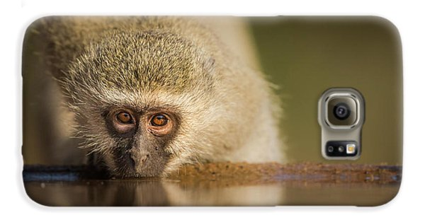 Ape Galaxy S6 Case - Attentive by Jaco Marx