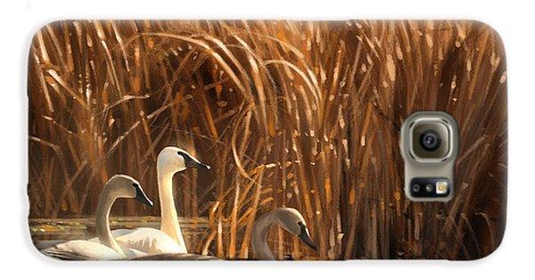 Swan Galaxy S6 Case - Autumn Light- Trumpeter Swans by Aaron Blaise