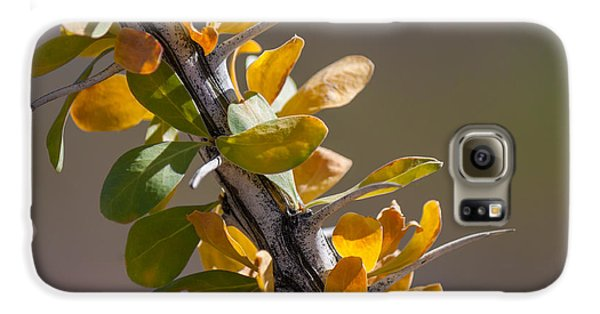 Autumn Ocotillo Galaxy S6 Case