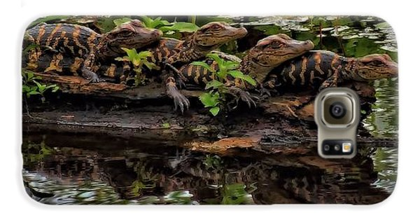 Baby Alligators Reflection Galaxy S6 Case by Dan Sproul