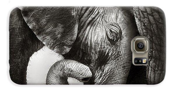 Cow Galaxy S6 Case - Baby Elephant Seeking Comfort by Johan Swanepoel