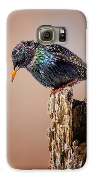 Backyard Birds European Starling Galaxy S6 Case by Bill Wakeley