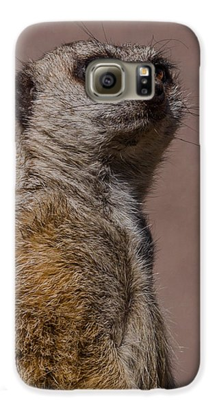 Bad Whisker Day Galaxy S6 Case by Ernie Echols