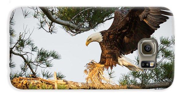 Bald Eagle Building Nest Galaxy S6 Case