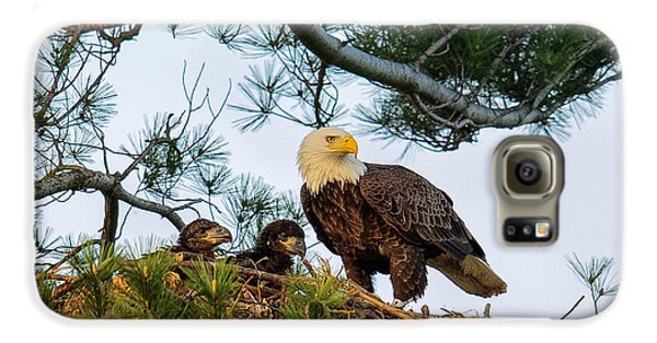 Bald Eagle With Eaglets  Galaxy S6 Case