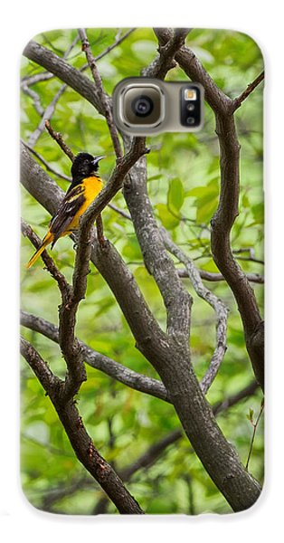 Baltimore Oriole Galaxy S6 Case