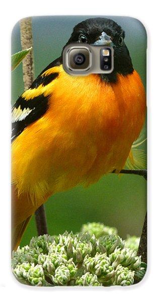 Baltimore Oriole Galaxy S6 Case