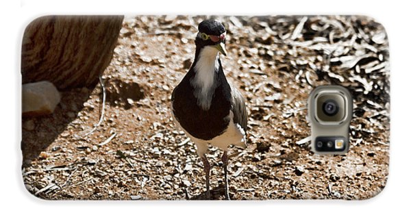 Banded Lapwing Galaxy S6 Case by Douglas Barnard