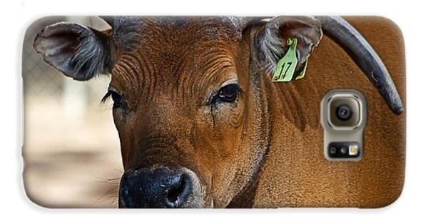 Banteng Girl Galaxy S6 Case by Miroslava Jurcik