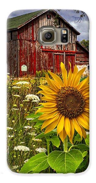 Sunflower Galaxy S6 Case - Barn Meadow Flowers by Debra and Dave Vanderlaan