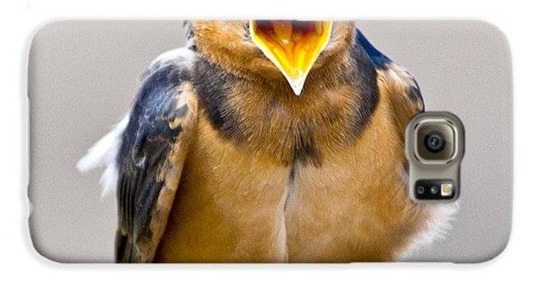 Galaxy S6 Case featuring the photograph Barn Swallow by Ricky L Jones