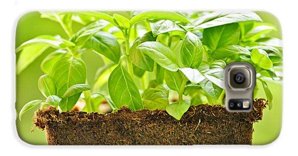 Garden Galaxy S6 Case - Basil by Elena Elisseeva