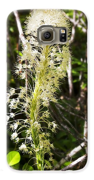 Bear Grass No 3 Galaxy S6 Case