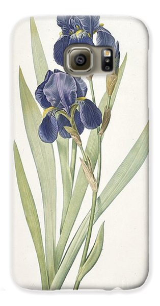 Bearded Iris Galaxy S6 Case by Pierre Joseph Redoute