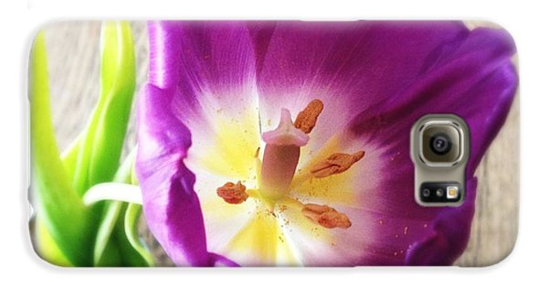 Beautiful Galaxy S6 Case - Beautiful Purple Flower From Above by Matthias Hauser