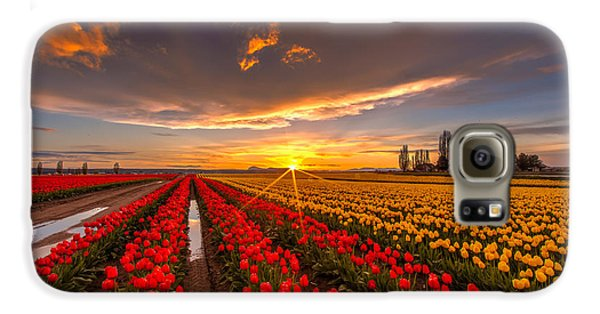 Beautiful Tulip Field Sunset Galaxy S6 Case by Mike Reid